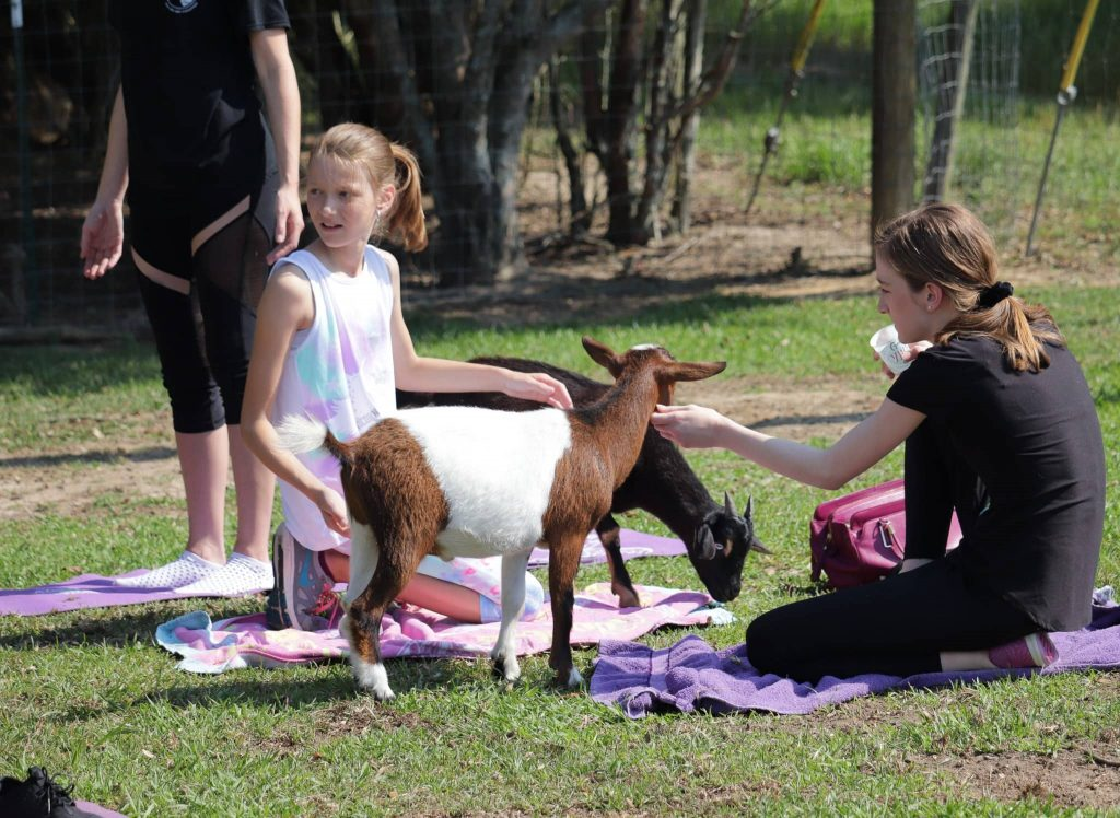 Goat Yoga. A photo of people doing yoga with goats