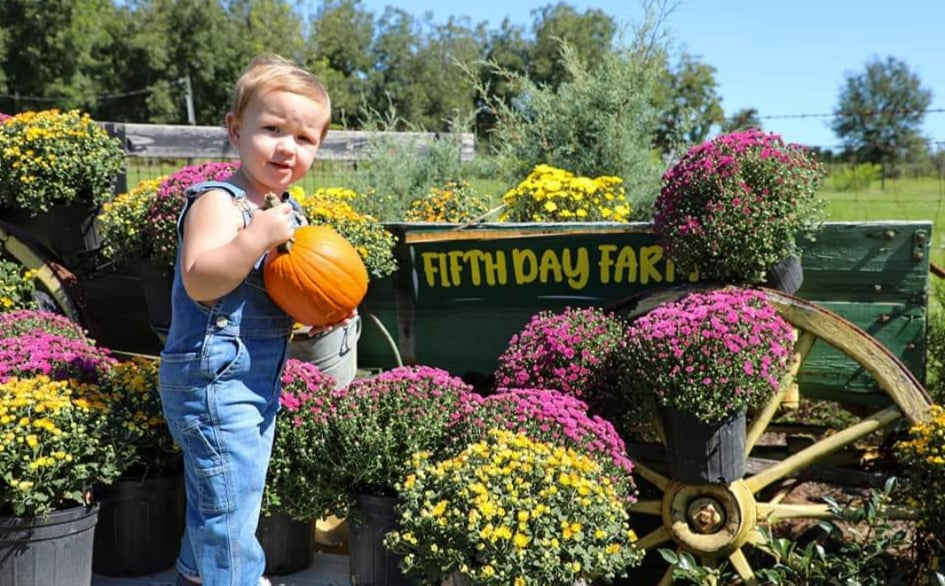 fall photo sessions near me. A photo of a little boy holding a pumpkin at Fifith Day Farms