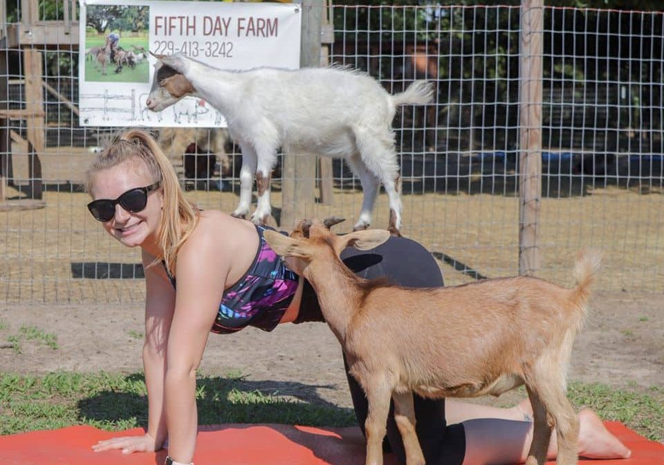 Goat Yoga near me. A photo of a woman doing a yogo pose with a couple of goats.