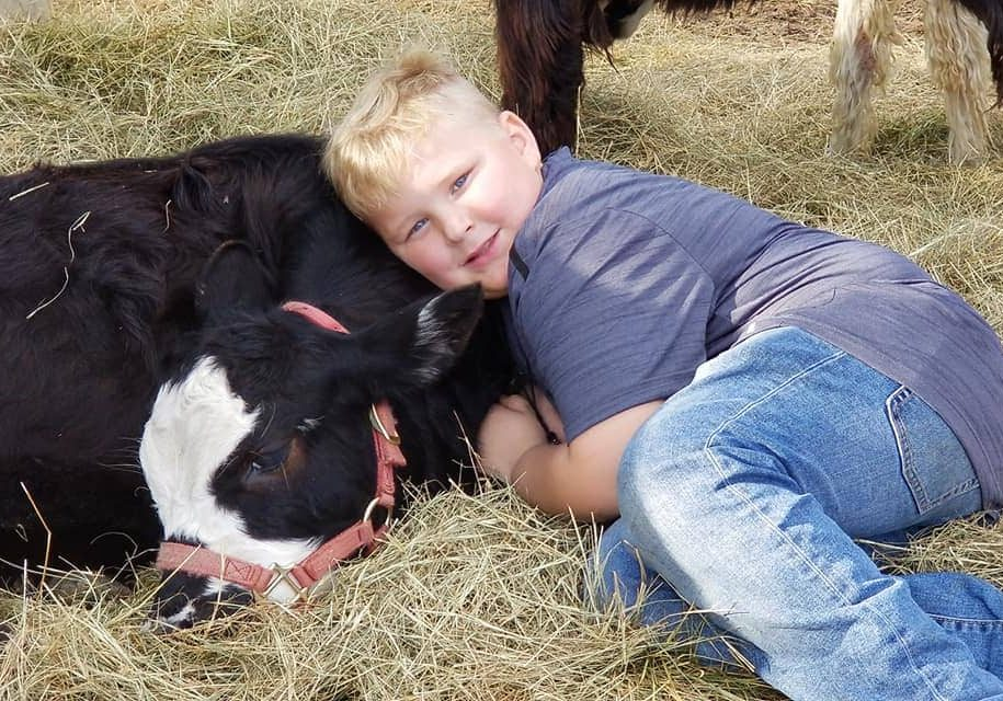 Mini Cow. A photo of a young man with Moonpir, our mini cow at Fifth Day Farm